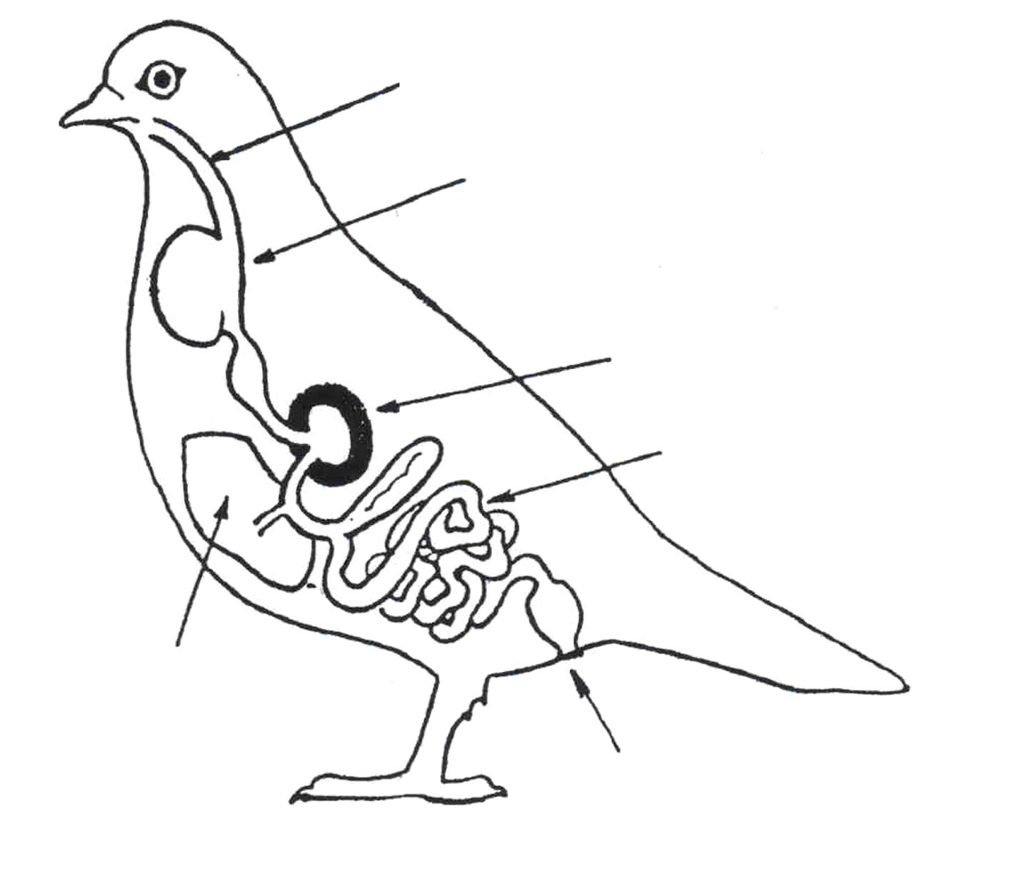 Dessine un oiseau galerie tatouage - Comment dessiner un oiseau facile ...